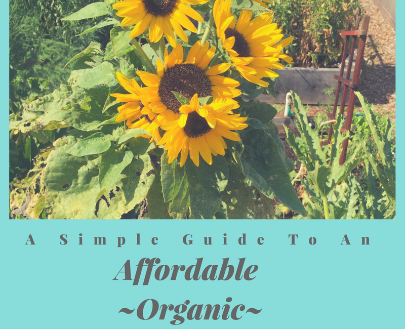 organic lifestyle guide