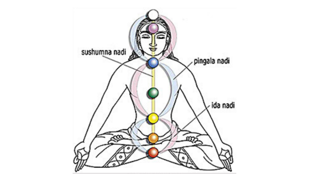 Ida Pingala Sushumna Nadis and the Chakras
